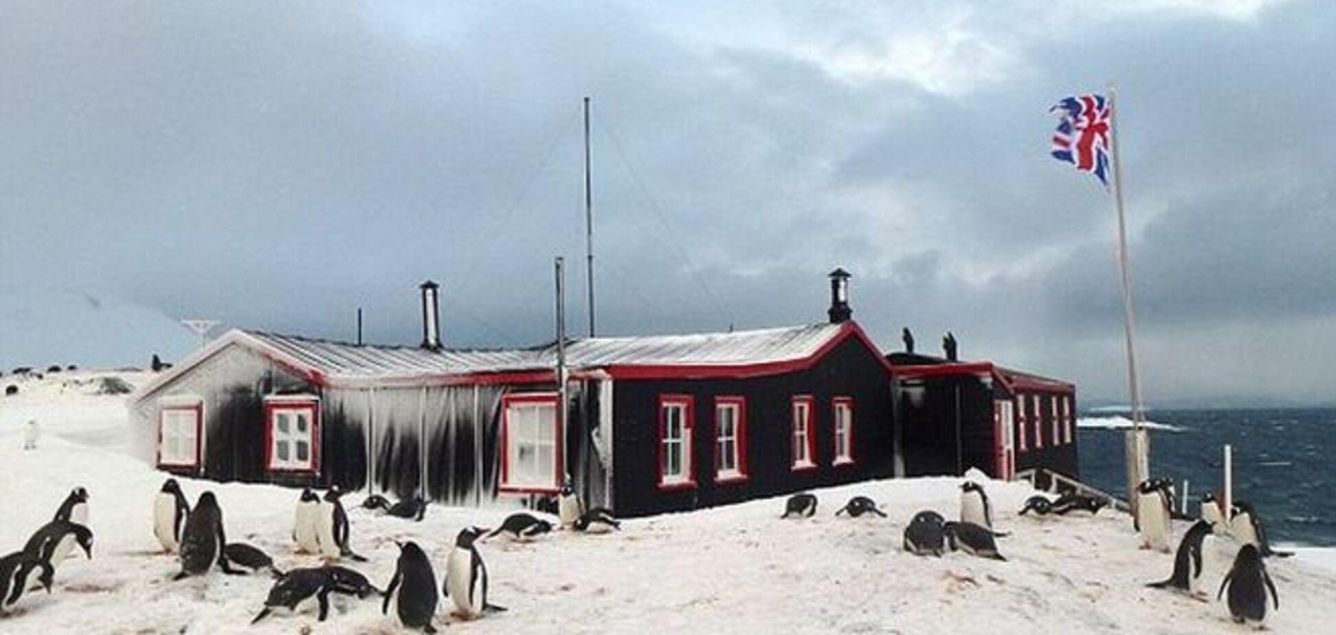 'Готов терпеть 'аромат' тысяч пингвинов?' Вакансия в Антарктиде вызвала ажиотаж