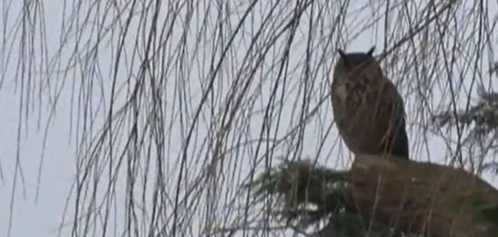 Летающий 'террорист' нападает на жителей Голландии: видеорепортаж