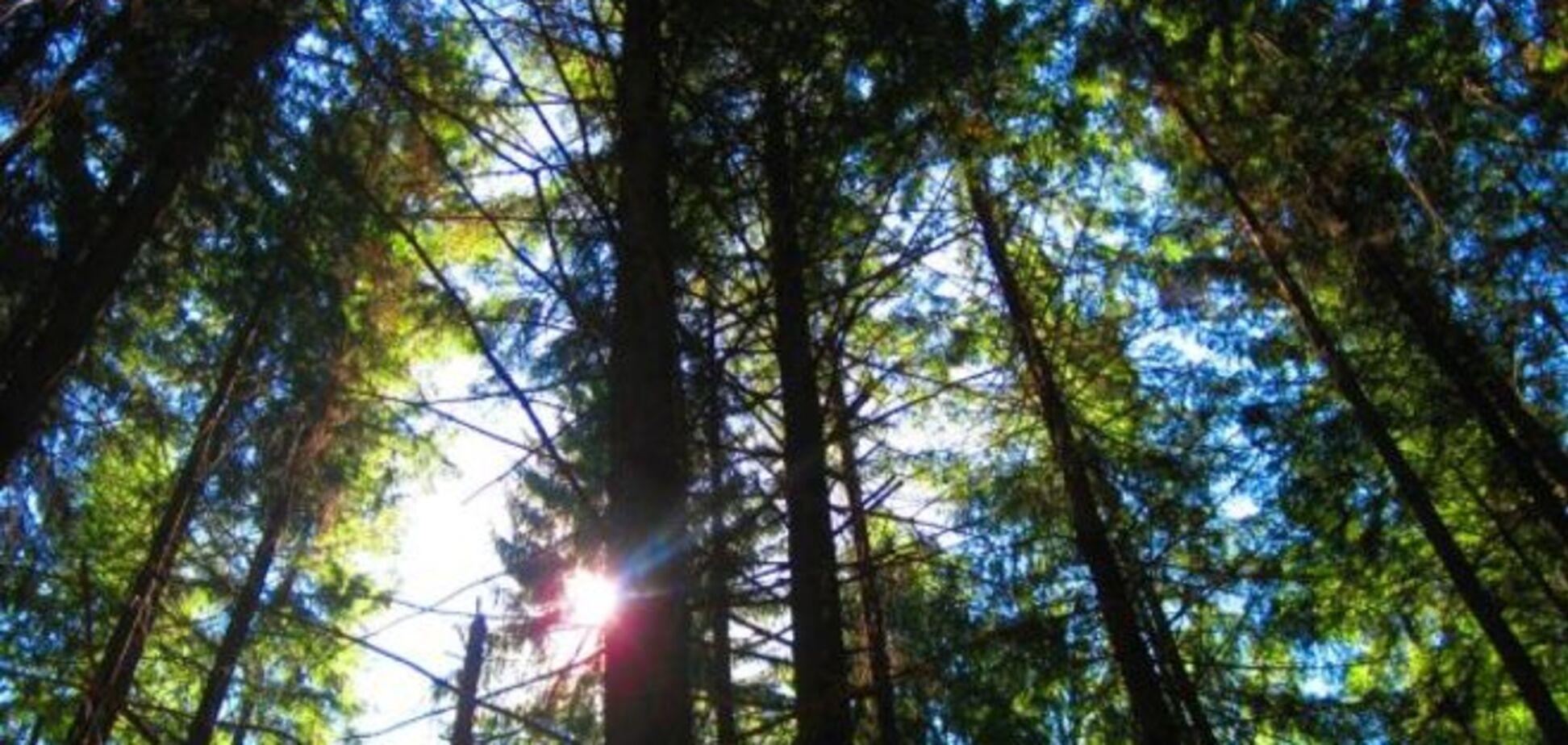 'Лісова мафія' зійшла з розуму