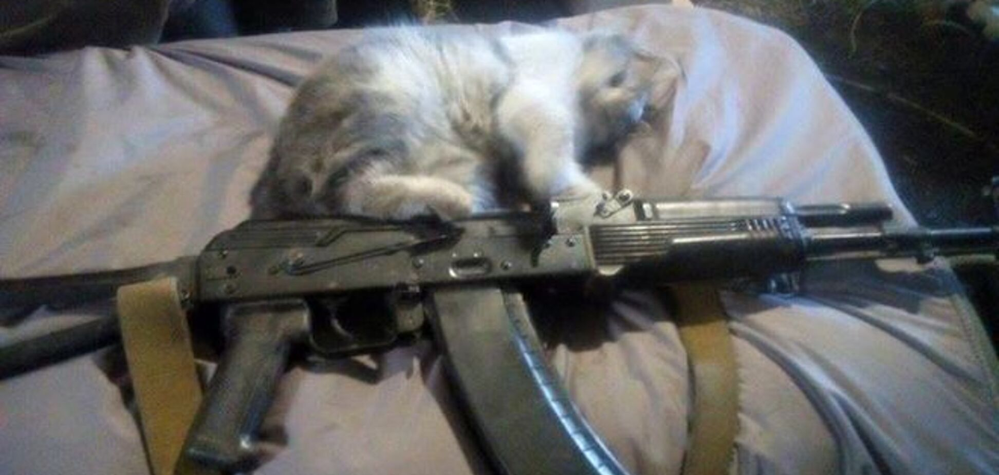 'Кент' и 'Патриот'. Боевые 'противотанковые' коты несут службу в зоне АТО: фотофакт