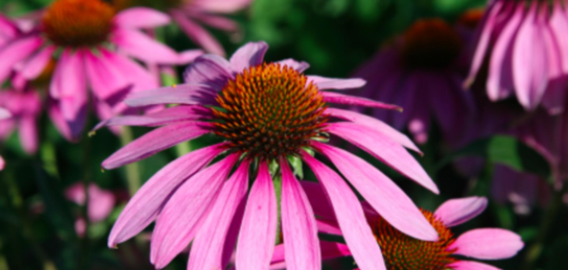 9 противовирусных трав и приправ