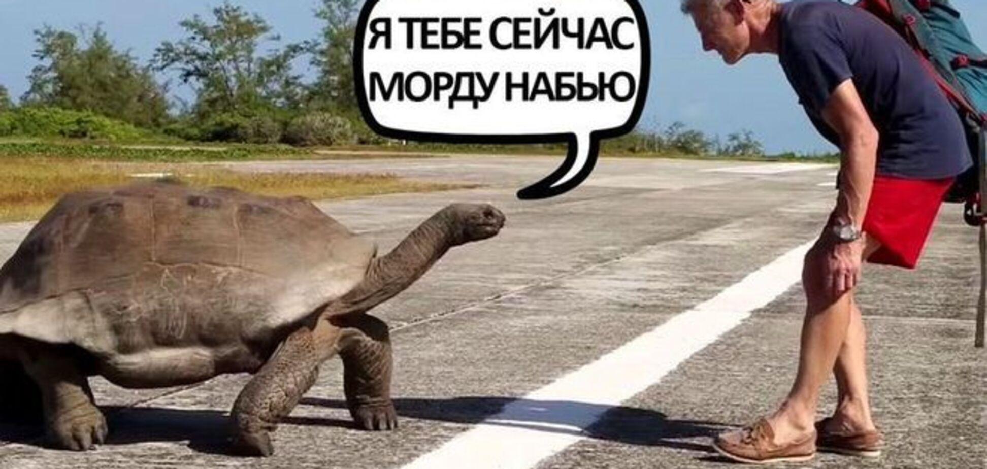 Я тебе сейчас морду набью: черепаха жестоко прогнала ведущего National Geographic