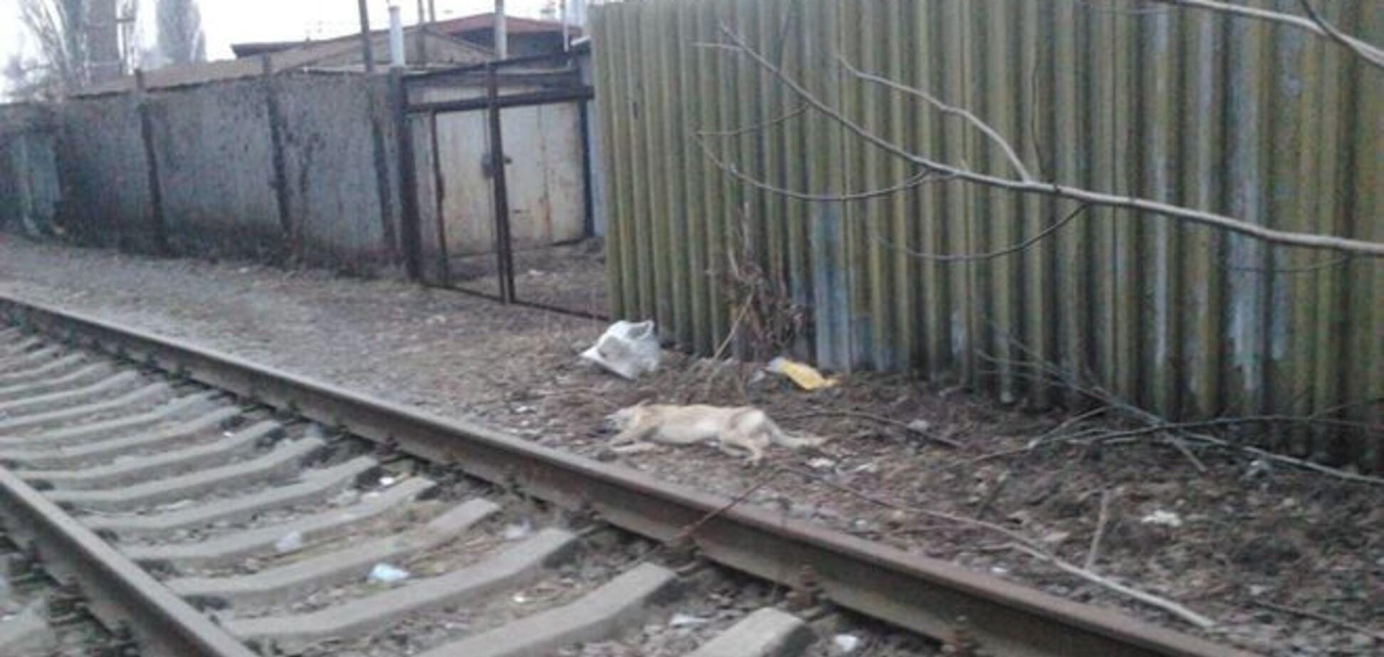 В Киеве массово расстреляли бездомных собак – активисты