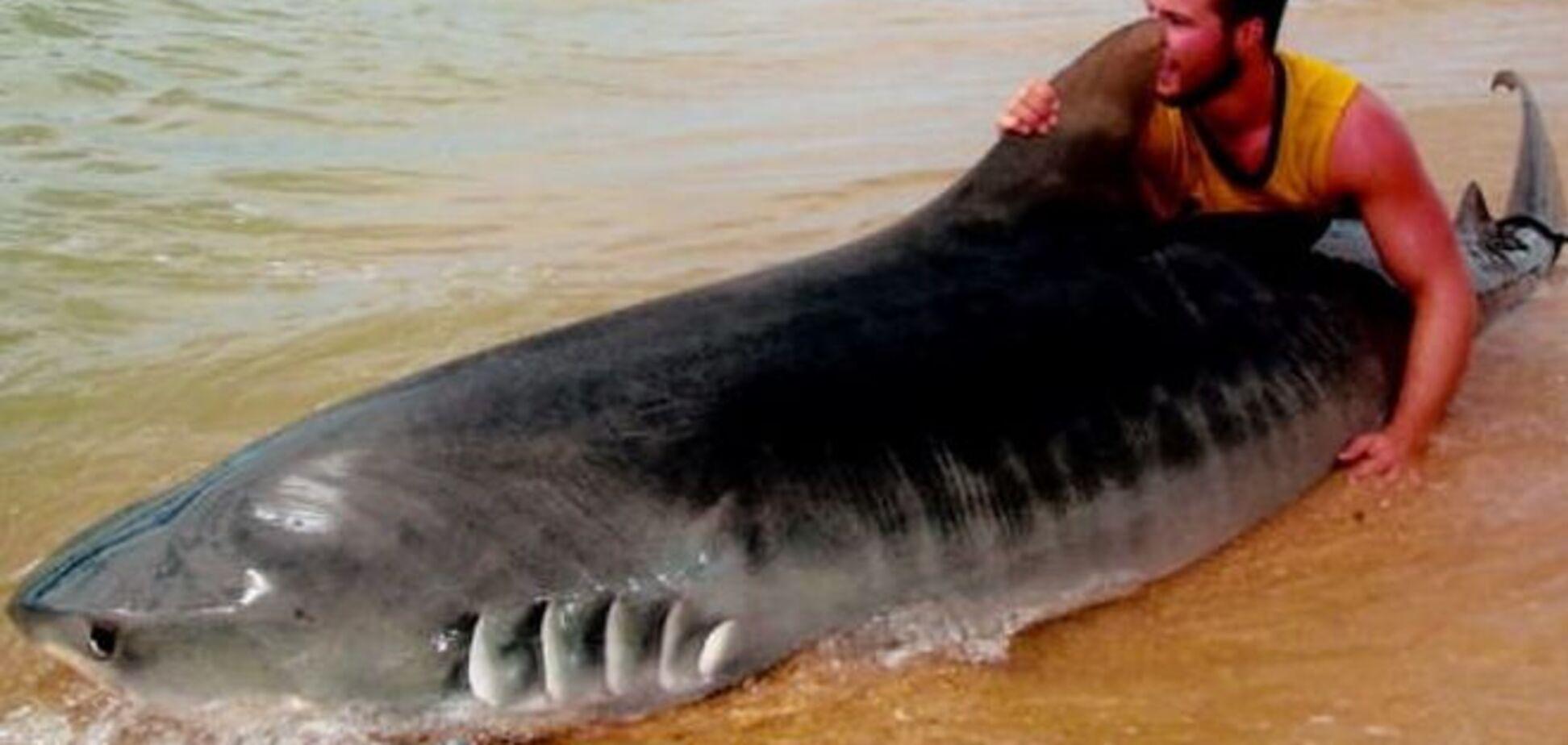 Австралиец поймал тигровую акулу голыми руками: опубликованы фото