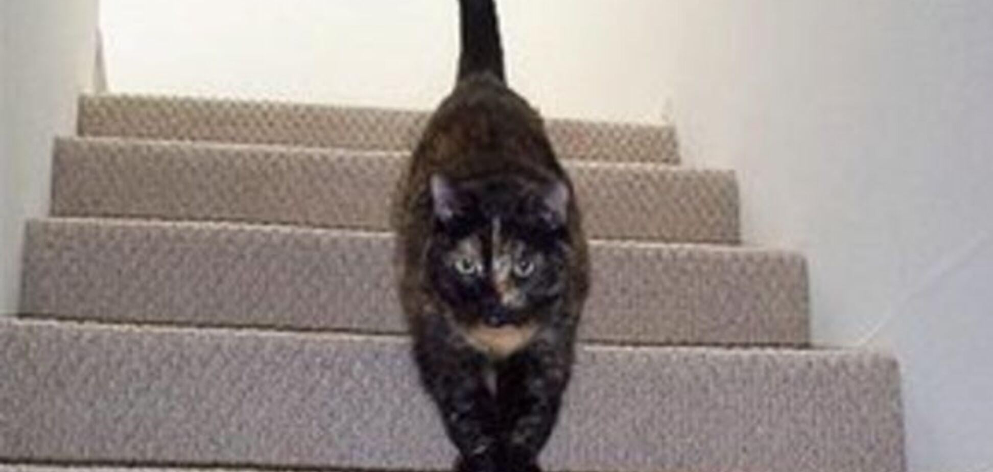 Кот, который заставил понервничать пользователей интернета