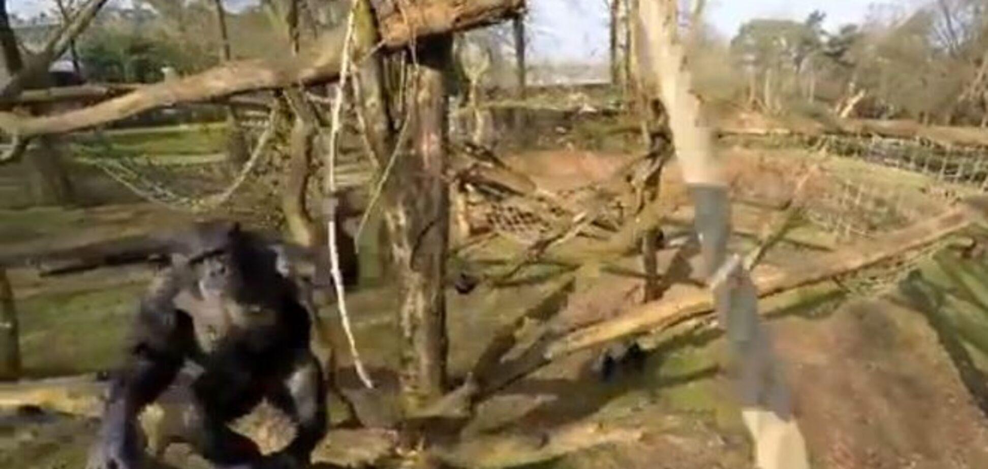 Обезьяна в зоопарке сбила палкой беспилотник: видеофакт