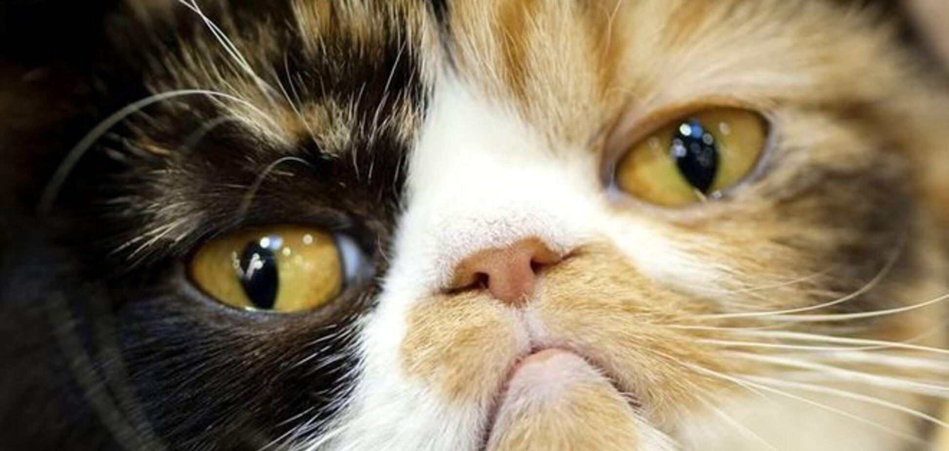 20 смешных кошек, которые пожалели, что сделали пакость