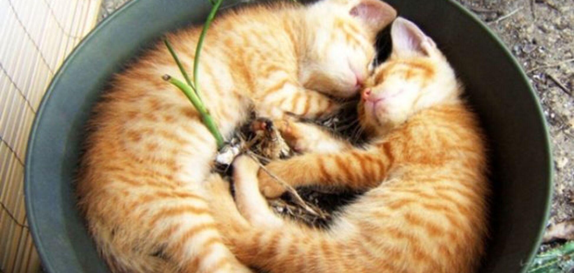 18 доказательств того, что коты - это растения