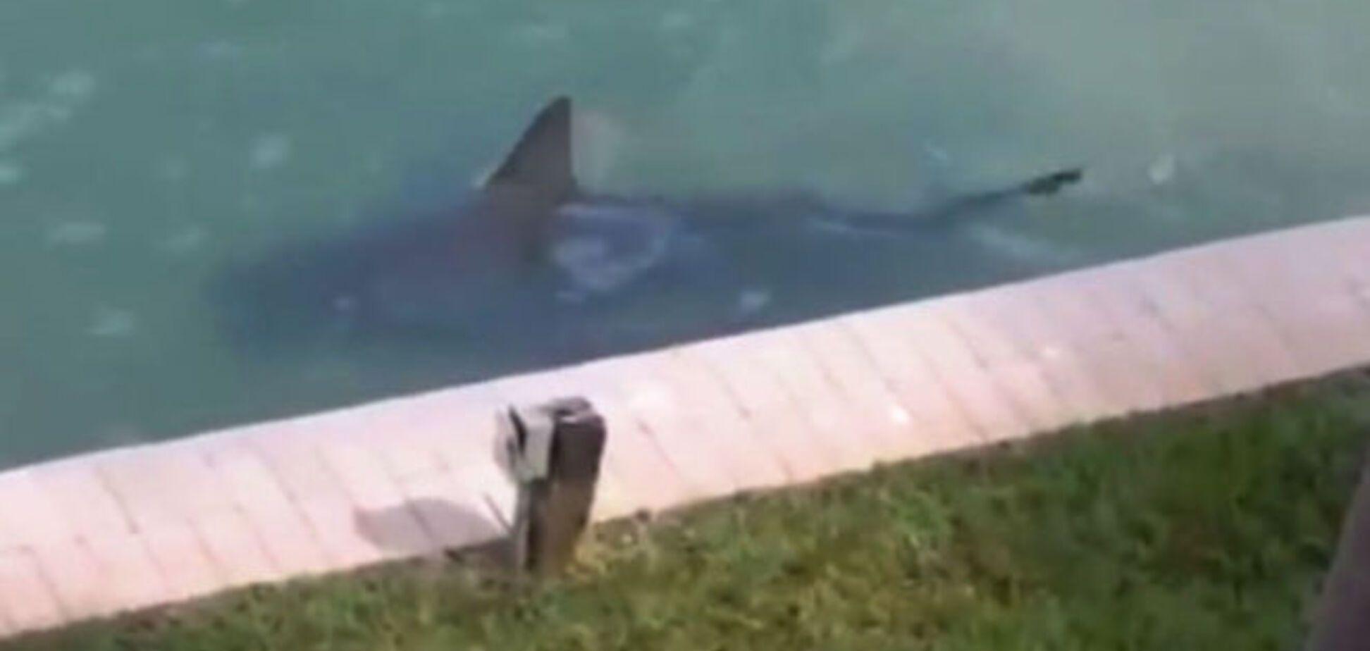 Американець знайшов у себе у дворі живу акулу: відеофакт