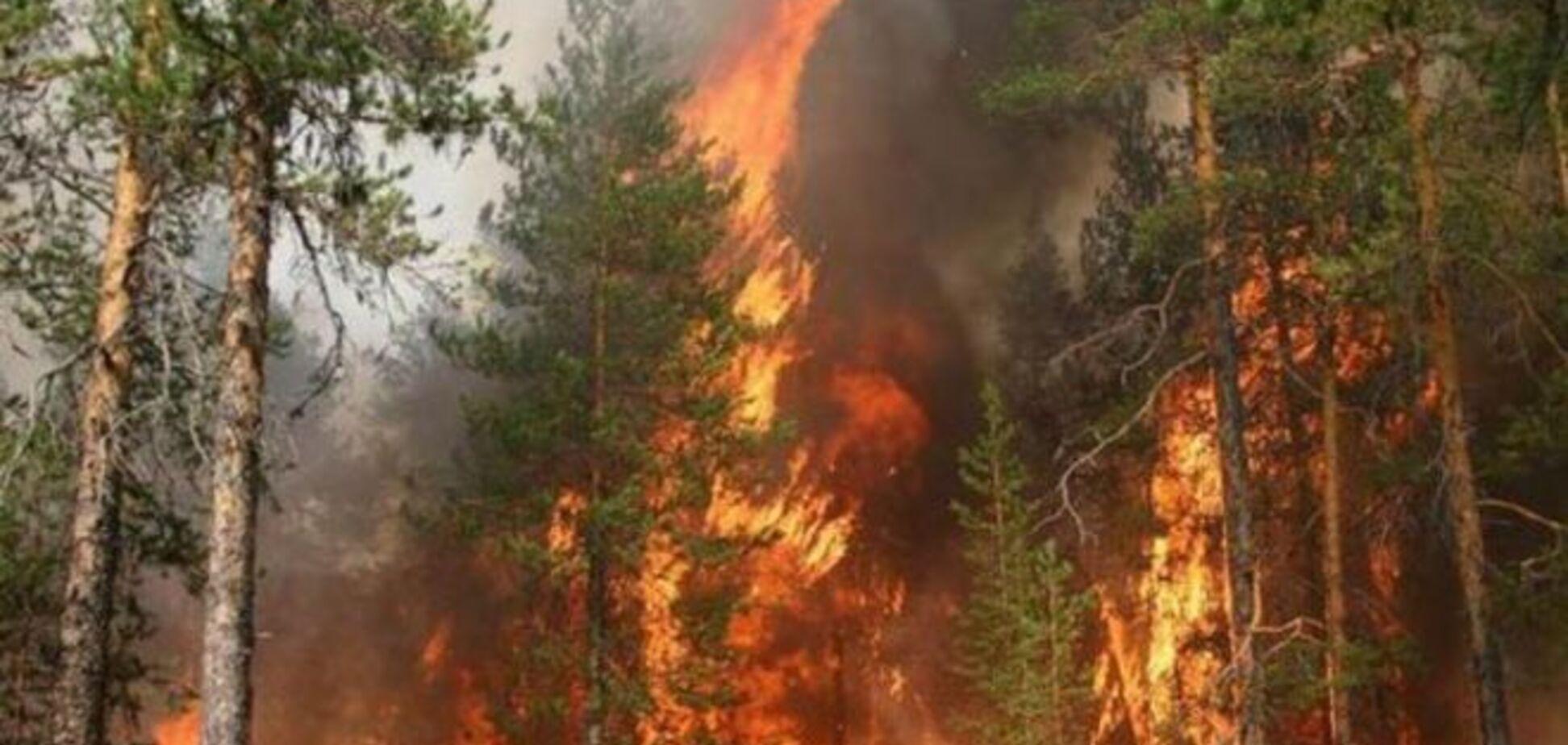 Площа пожеж в Сибіру продовжує зростати