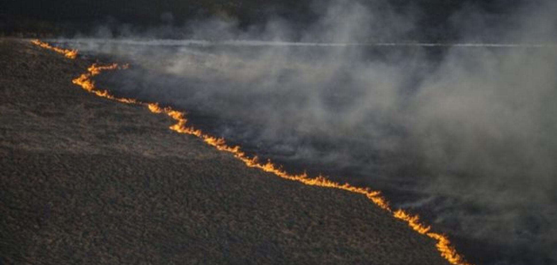 Экологи объяснили, зачем кому-то поджигать чернобыльские леса