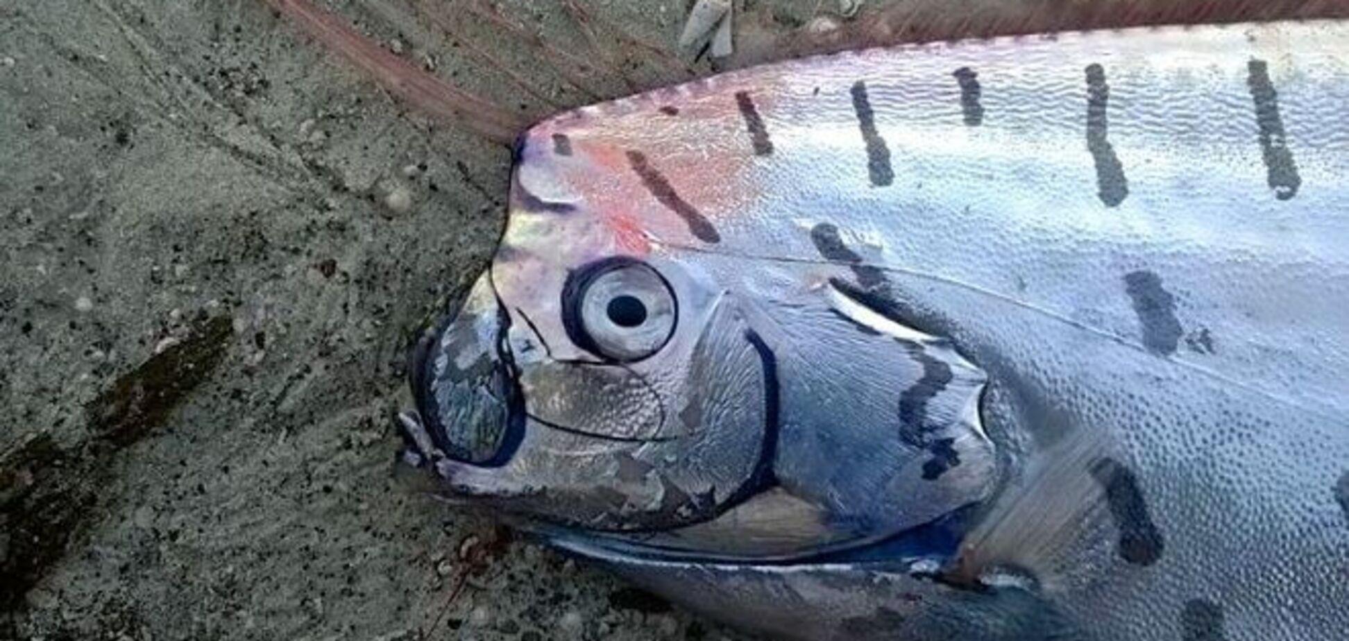 На берег Новой Зеландии выбросило гигантскую рыбу-чудовище: фото