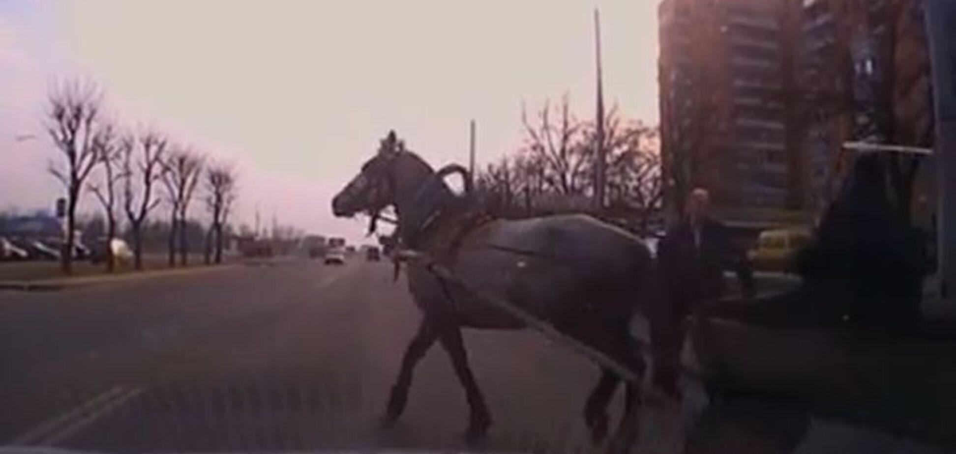 В Беларуси суровые гаишники устроили погоню за телегой с конем: видеофакт