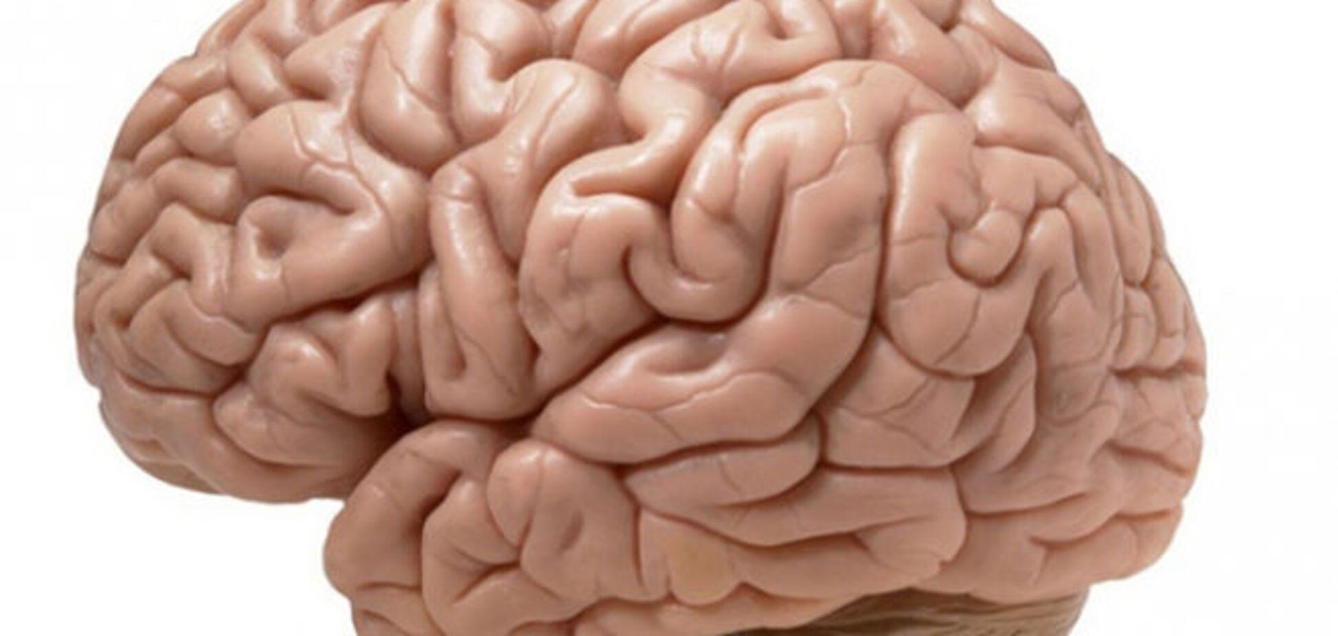 Мозг может менять пол - ученые