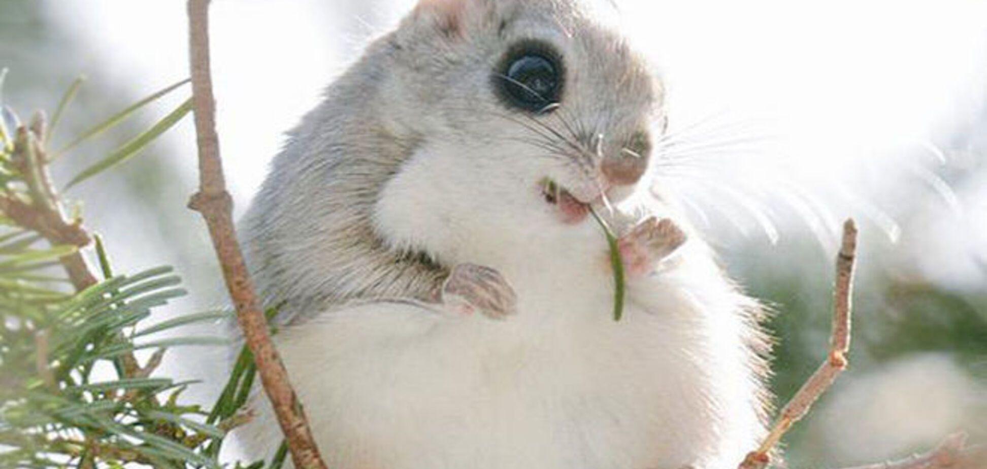 6 невероятно милых животных с острова Хоккайдо