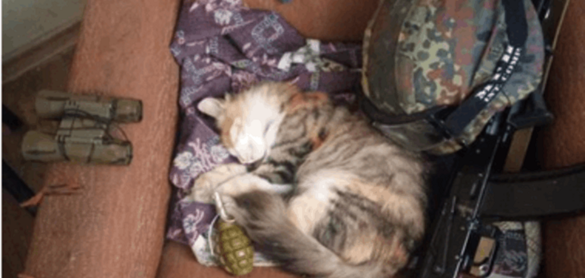 Боец АТО 'охотился' на террористов вместе с верным... котом: фотофакт