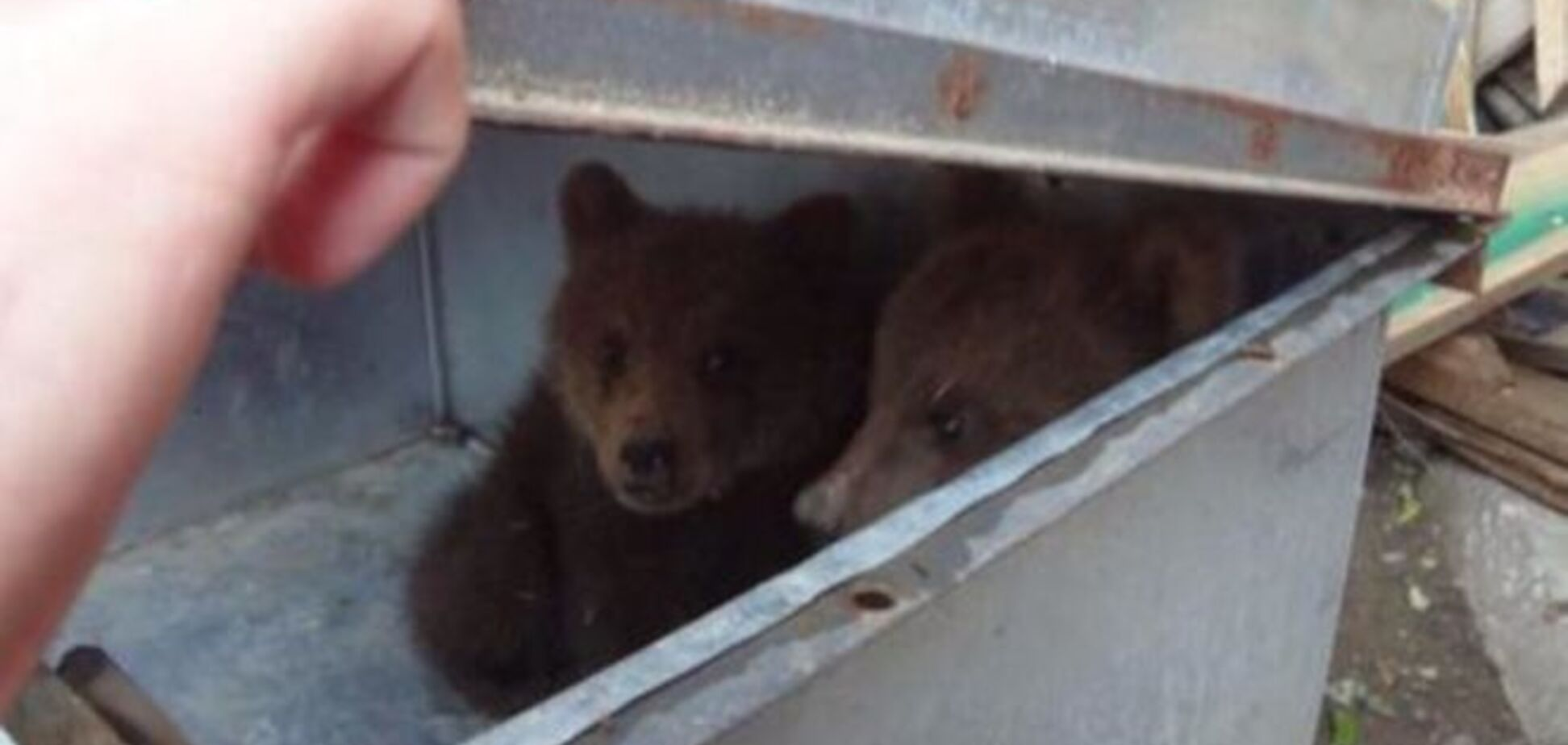 Це диво! Два ведмедика врятувалися від повені в Тбілісі: фотофакт