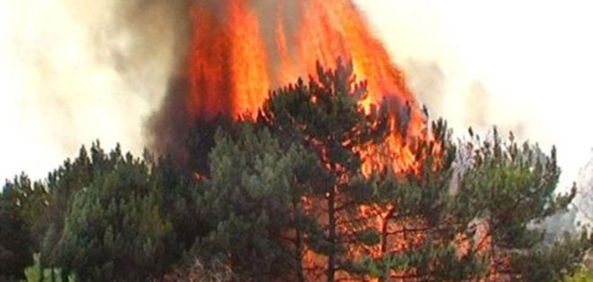 Террористы 'Градом' сожгли 100 га леса на Луганщине