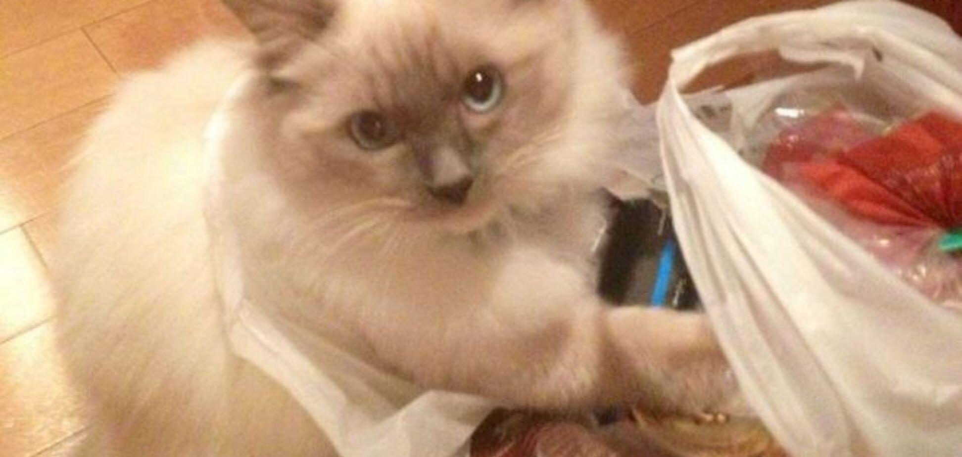 10 котов, которых неожиданно поймали за тайным делом