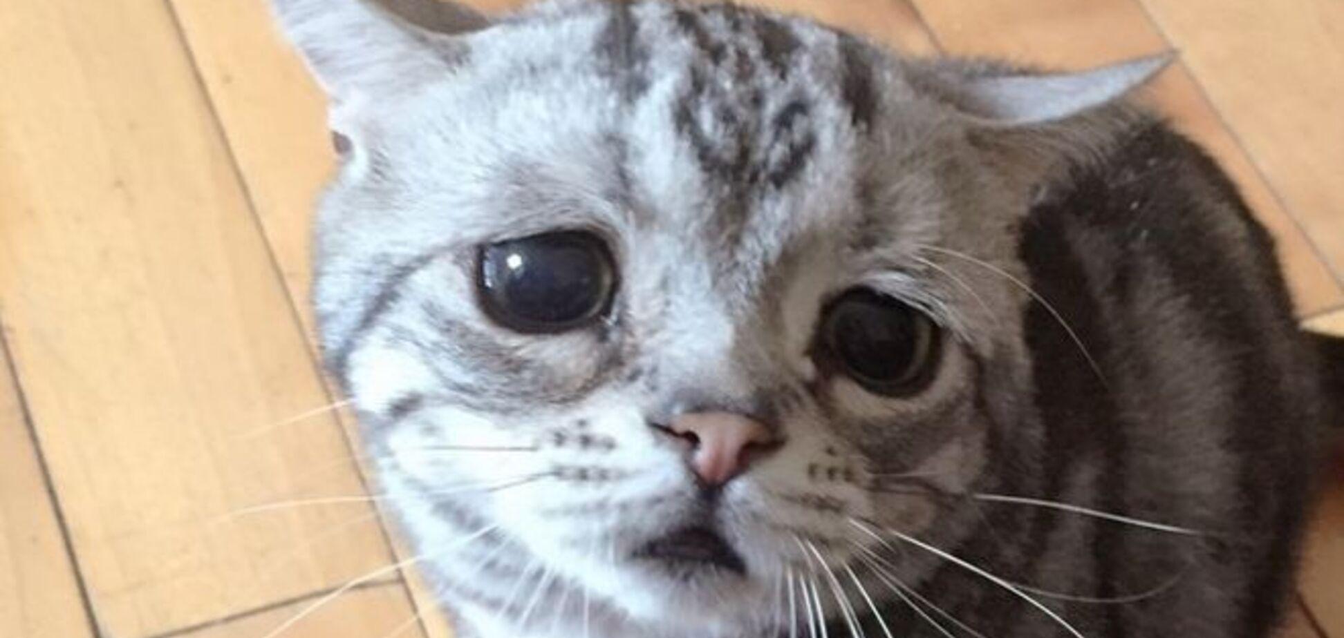 Самая грустная кошка растрогала чувства тысячи людей в сети: опубликованы фото