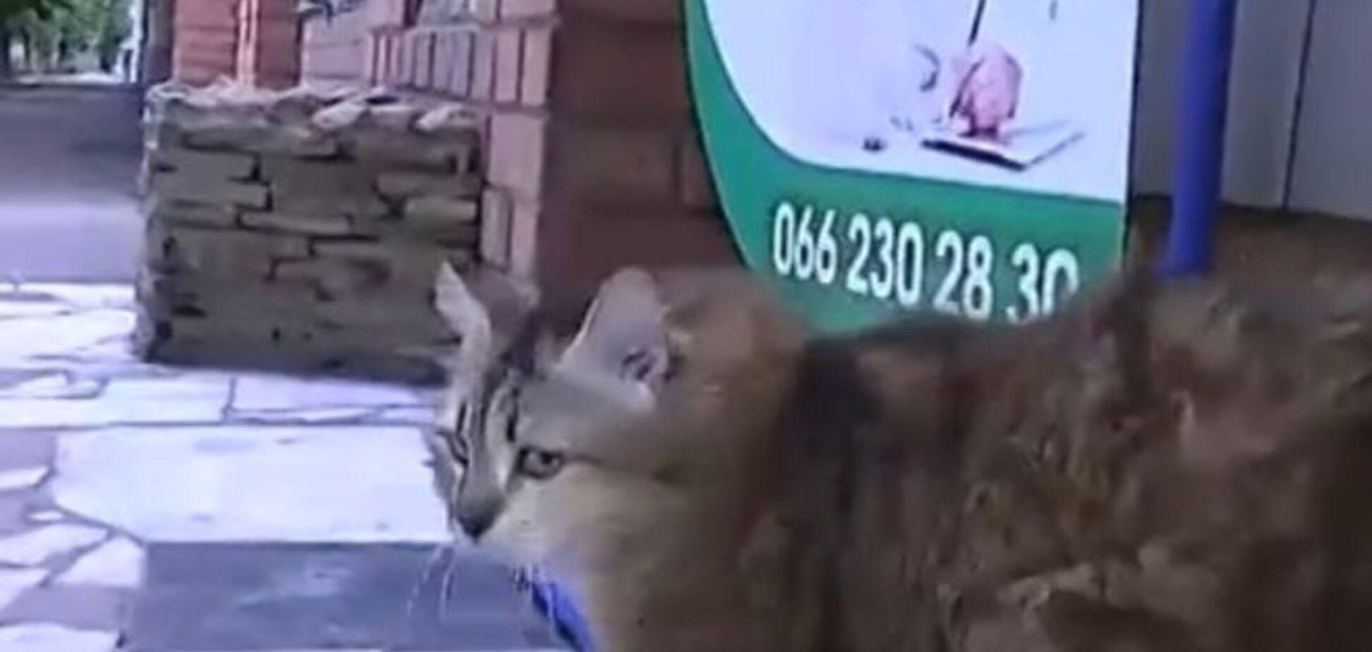 Життя війні зло: кішка з відірваними снарядом лапами скоро стане мамою