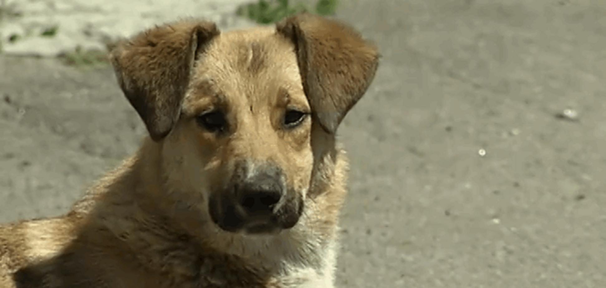В Киеве массово отравили бездомных собак