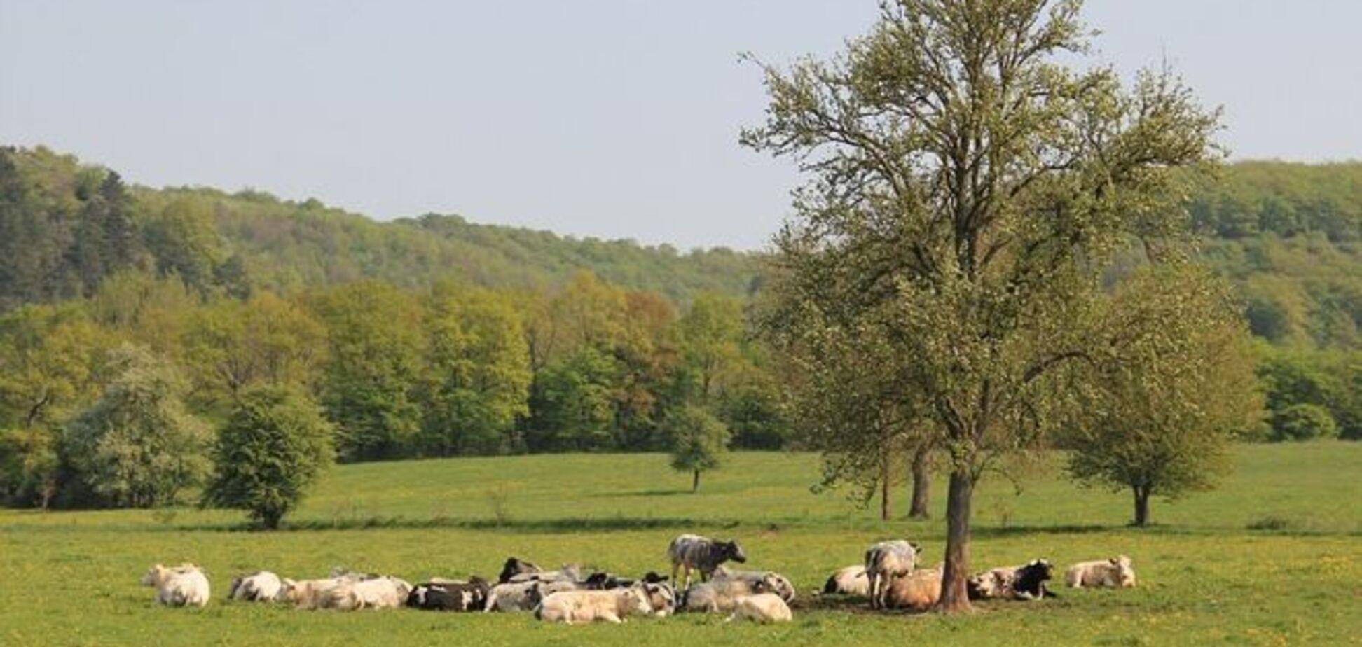 В Катериновке подорвался пастух на самодельной растяжке 'из матраса'