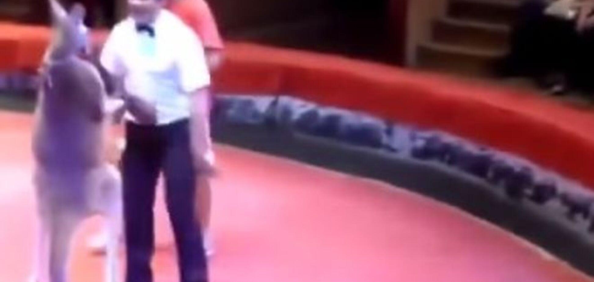 Кенгуру-боксер стал звездой интернета: яркое видео