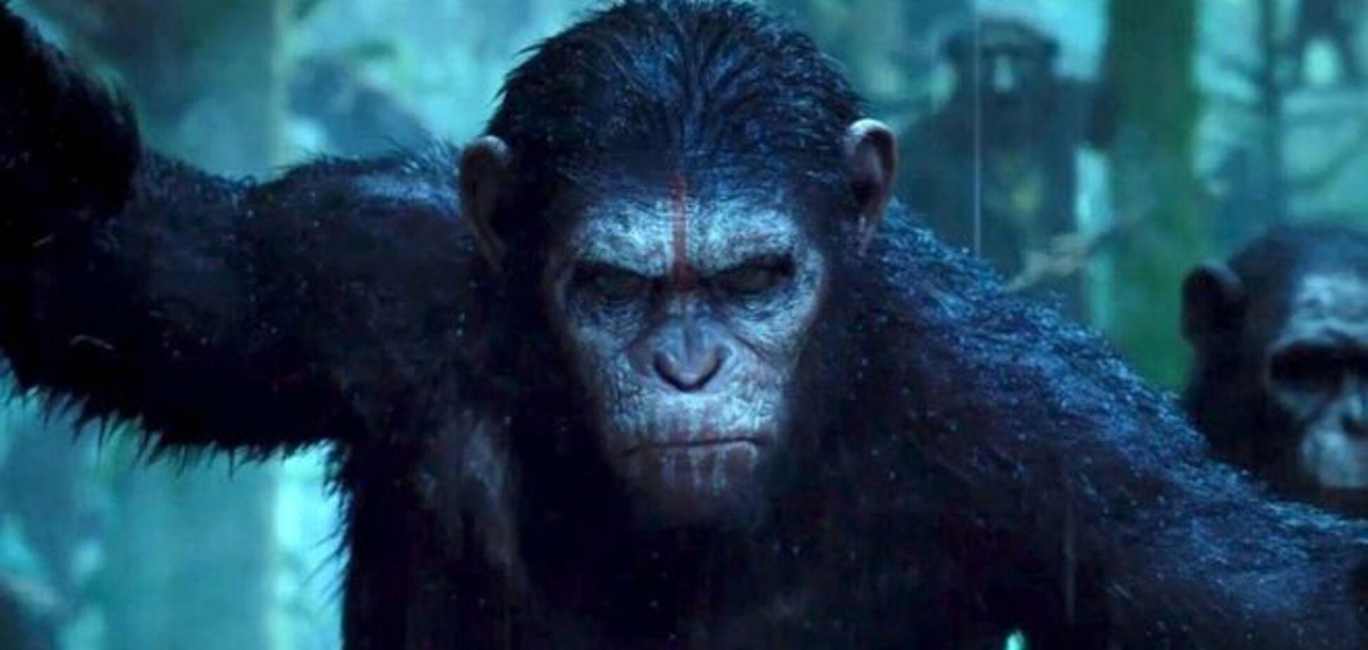 Планета мавп: вчені визнали, що шимпанзе перевершують людей