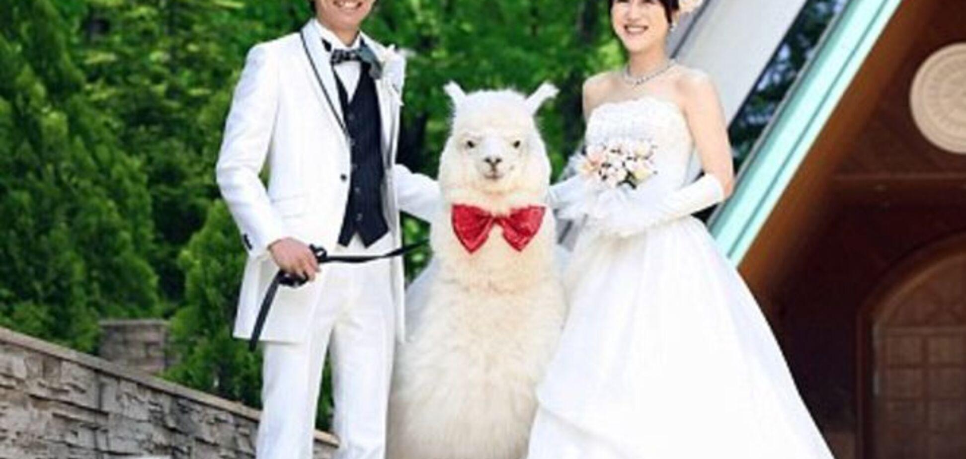 В Японии на свадьбу свидетелем приглашают… альпаку: опубликованы фото