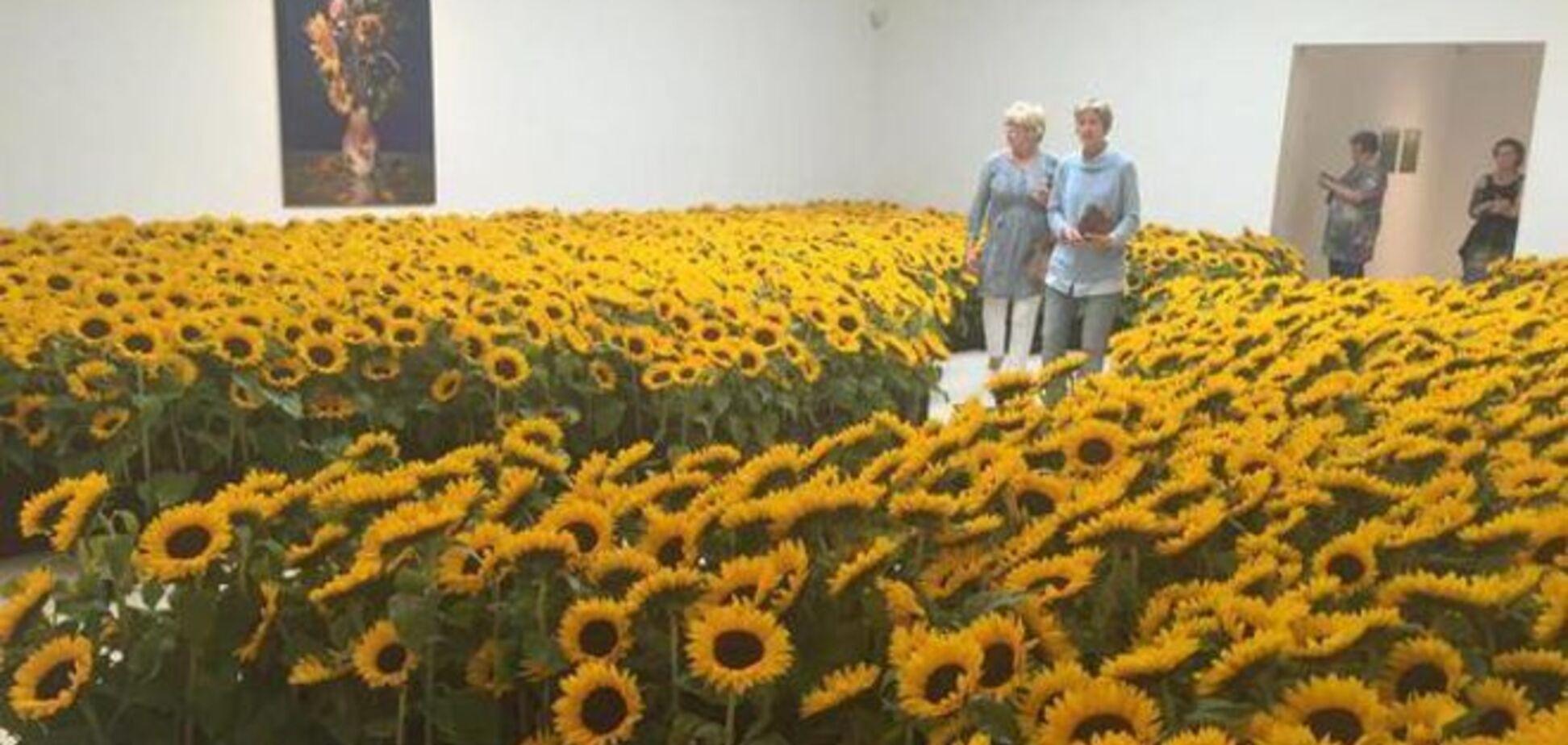 Море соняшників. У мережі показали живий меморіал жертвам MH17: фотофакт