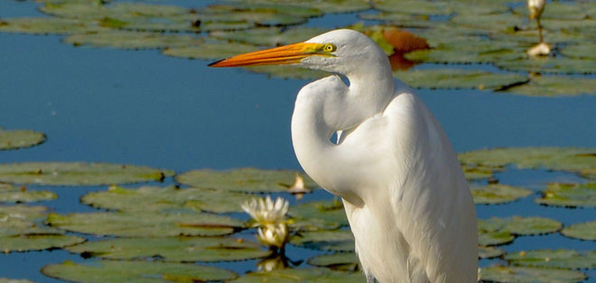 Циничные цапли: птицы улетели из аннексированного Крыма в Украину