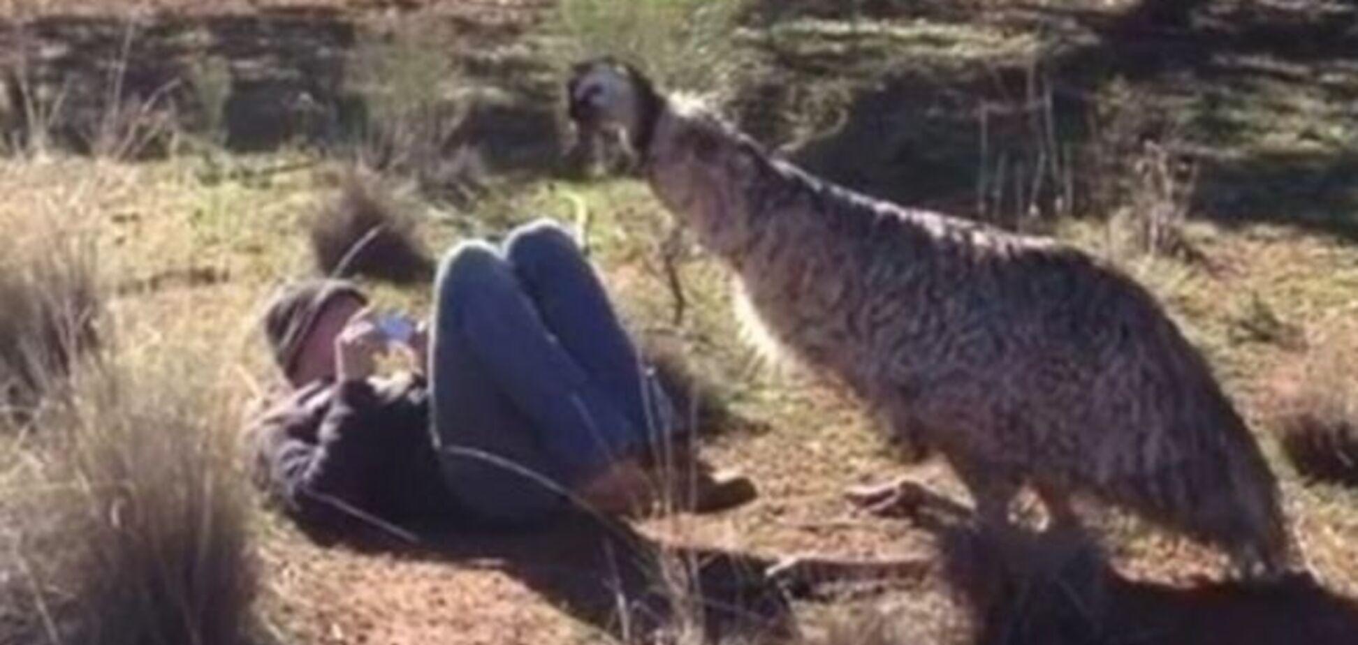 'Він в тебе закохався!': Американського туриста спробував зґвалтувати страус ему