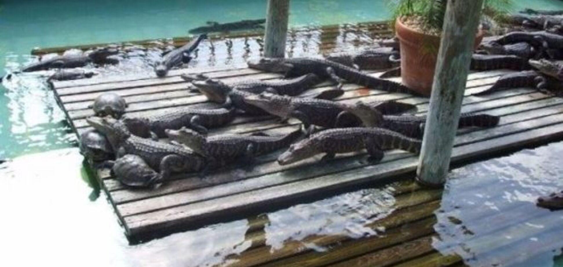 Сын Кличко стал нянькой для крокодилов