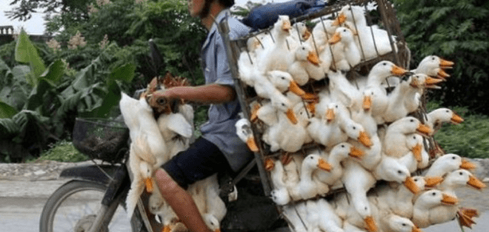 'Дебилы, сэр!' Пользователи высмеяли уничтожение трех гусей в России