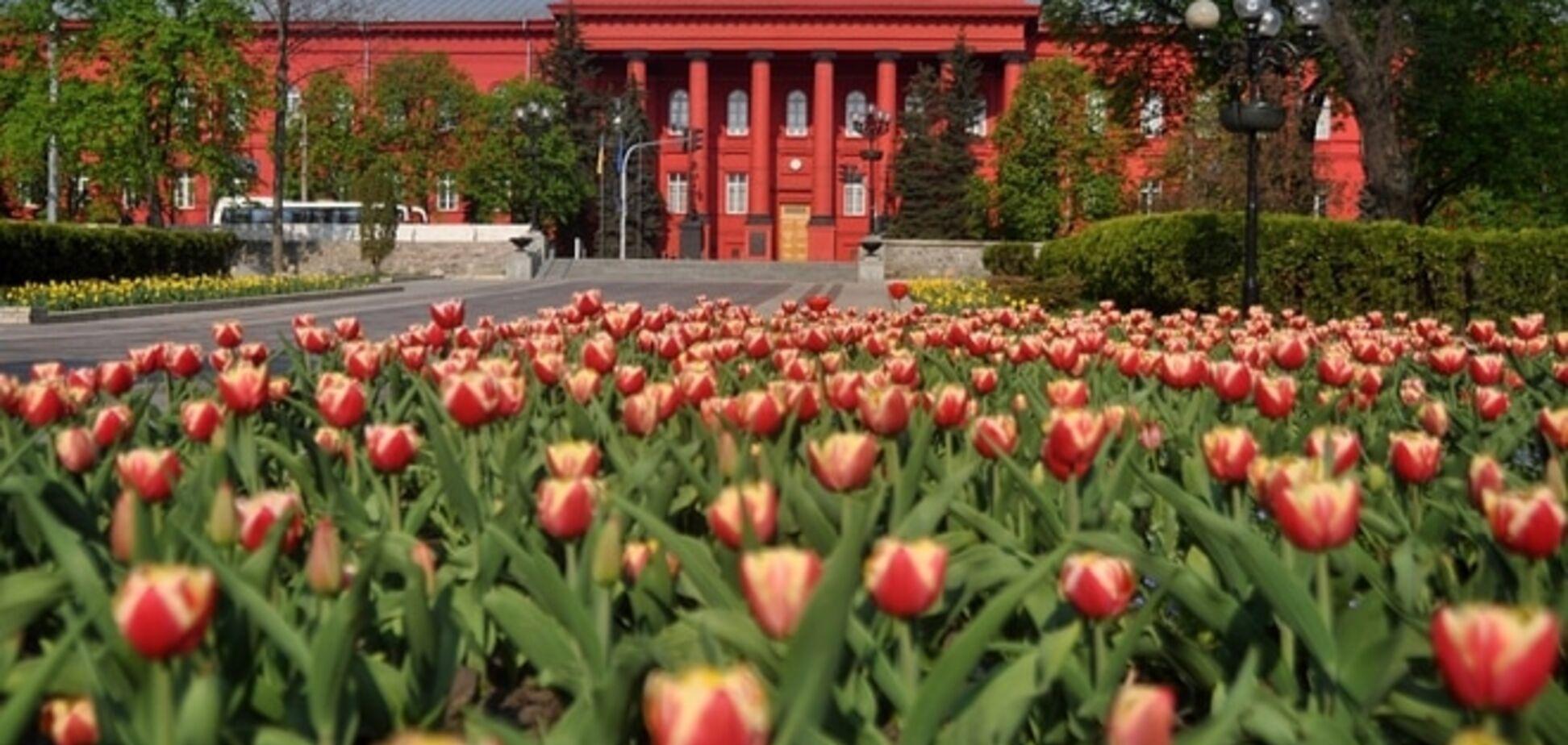 В Університеті Шевченка назвали найпопулярніші спеціальності