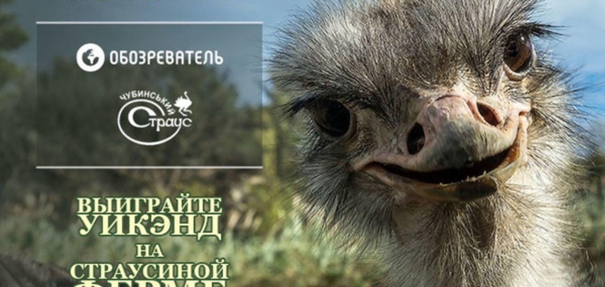 Успей посетить страусиную ферму - участвуй в конкурсе!