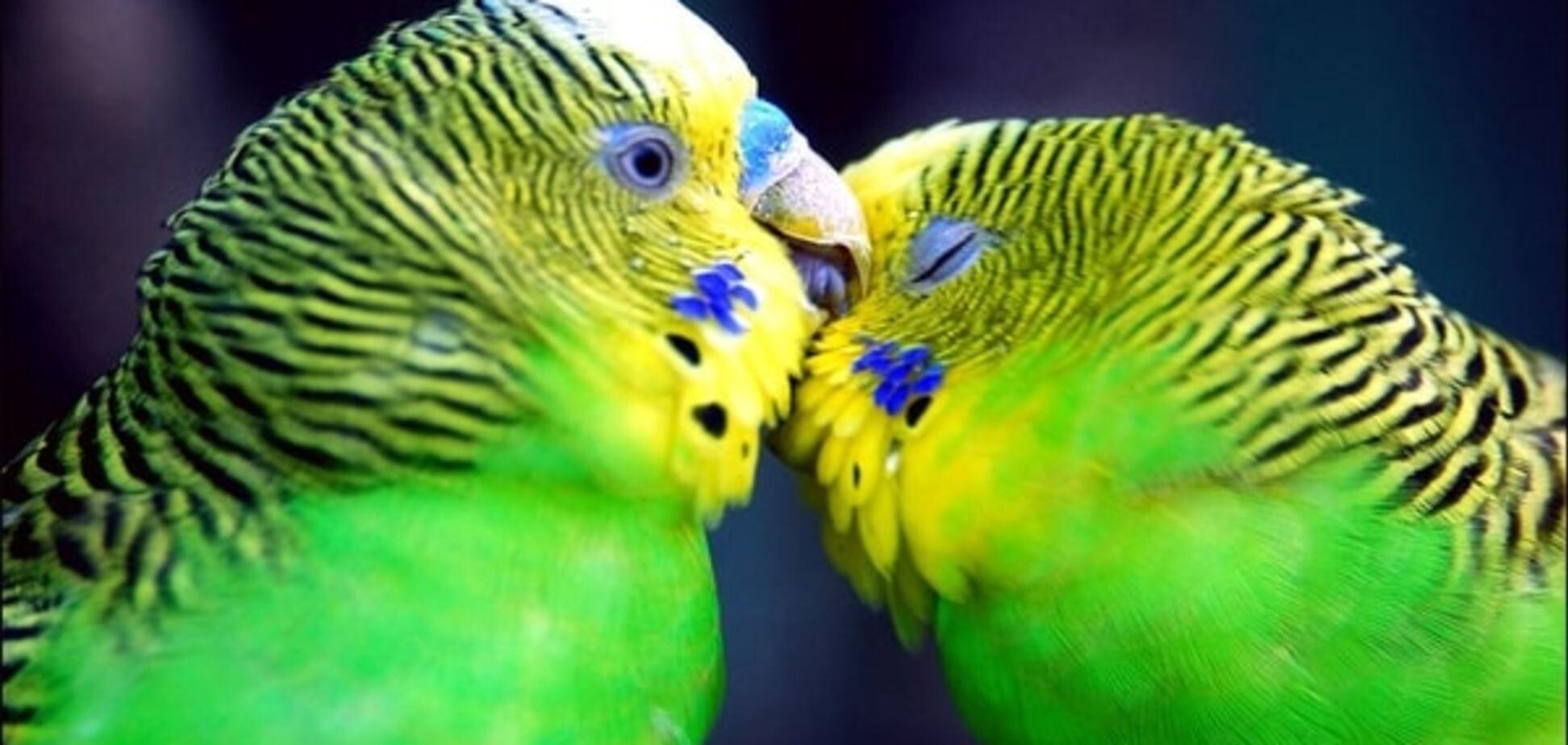 Нехитрая наука: птицы помогли биологам понять, что такое любовь