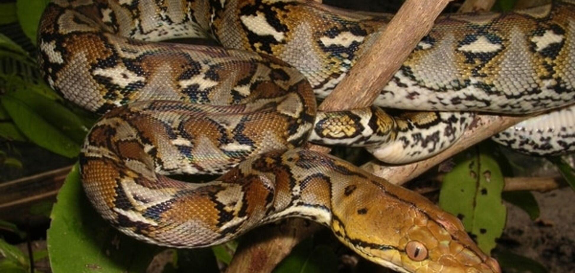 У Київському зоопарку з'являться гігантські змії