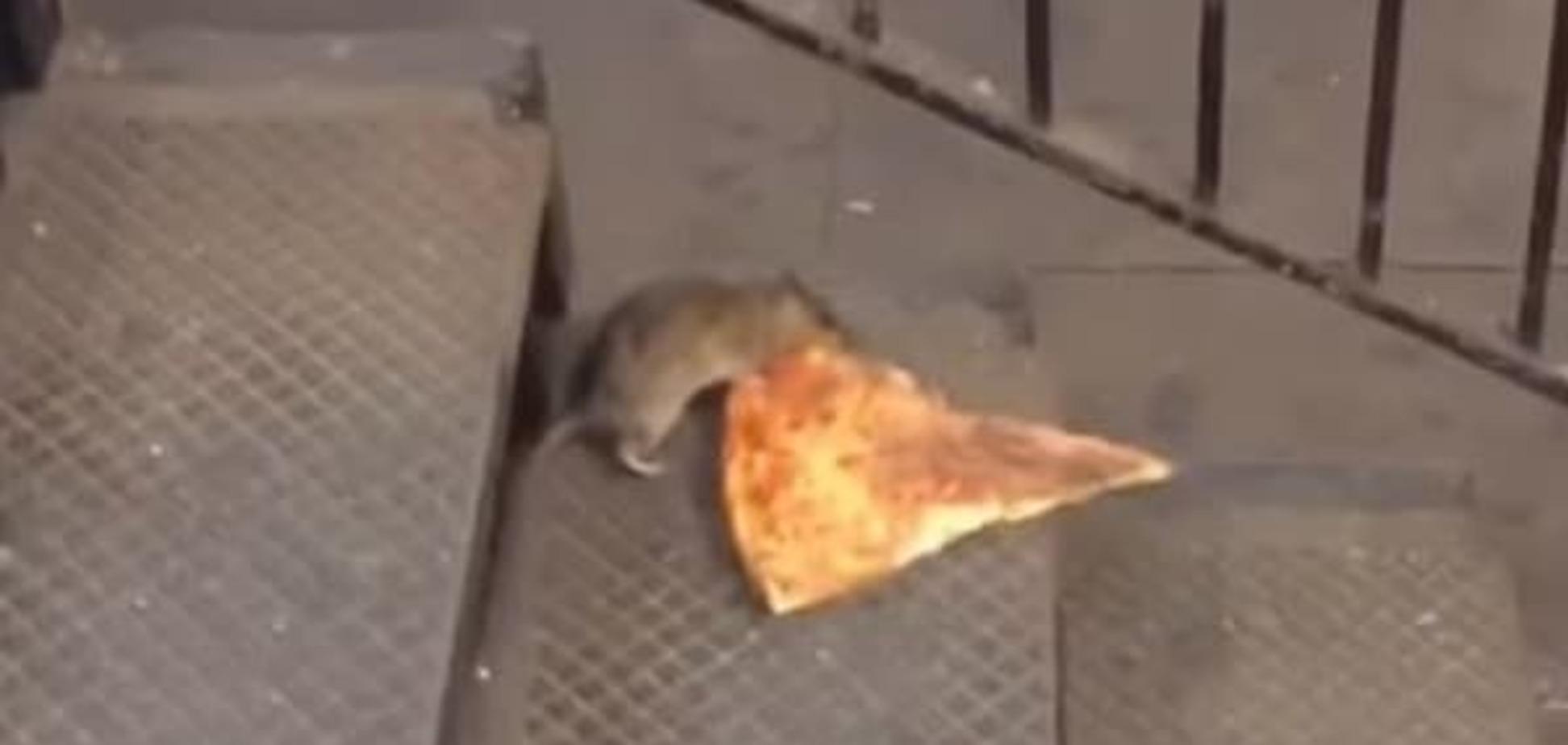 Тяжело, но не сдается: огромная крыса с куском пиццы стала звездой сети