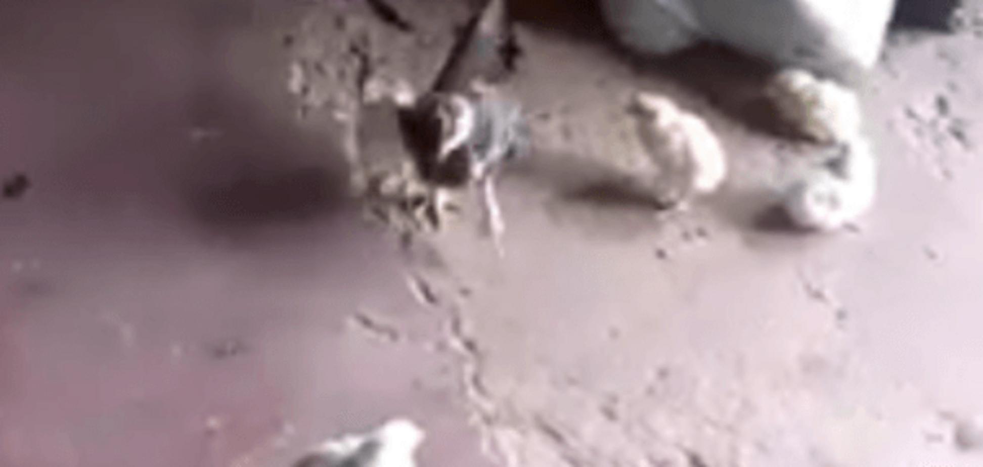 Так стають справжніми воїнами: відео із зухвалим курчам підірвало мережу