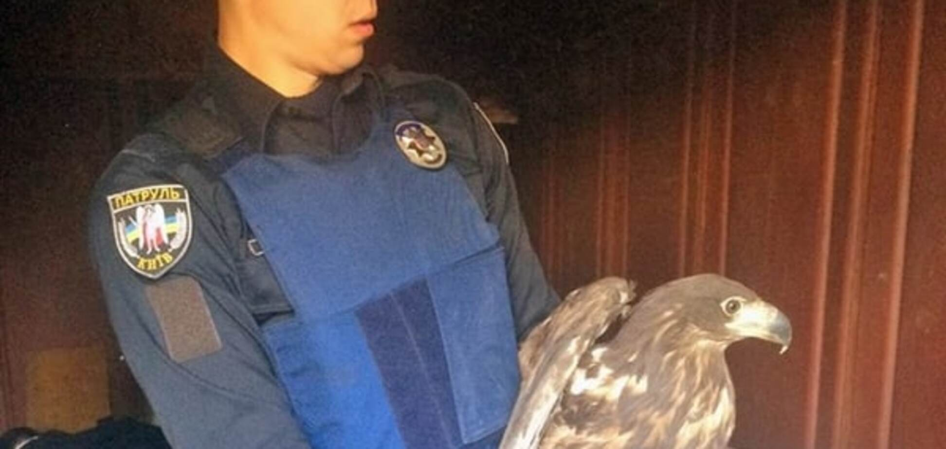 В Киеве полиция спасли из плена трех беркутов: опубликованы фото