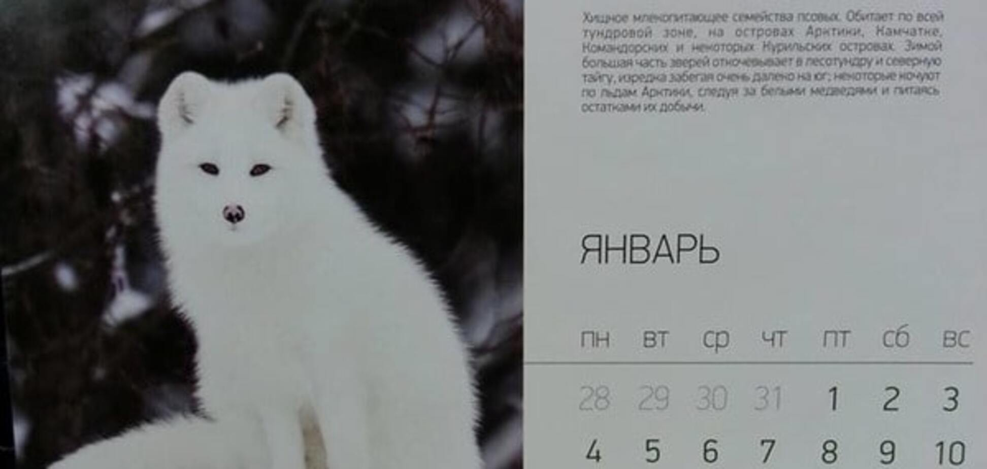 Всем песец: российским госслужащим раздали календари с намеком