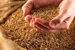 Гендиректор групи компаній ТІС: здійснення дерегуляції на зерновому ринку - головна заслуга Мінагрополітики