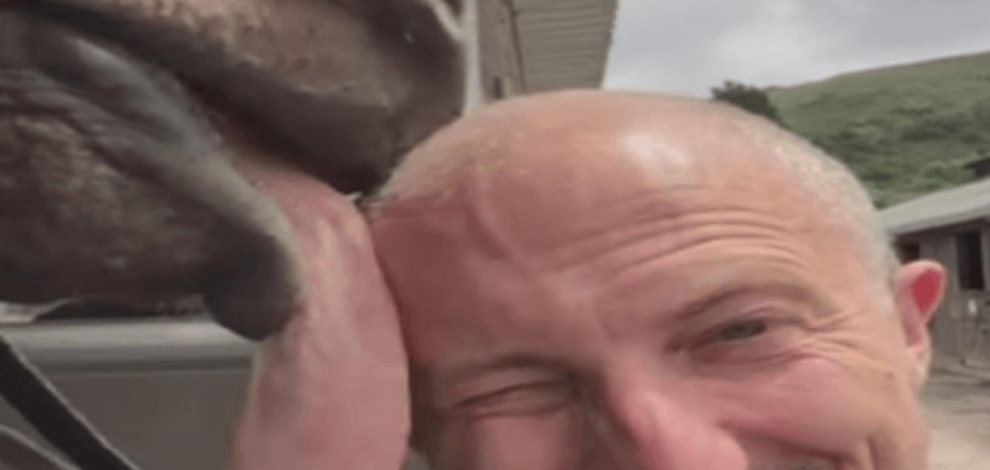Конь-лизун стал звездой Интернета: видеофакт