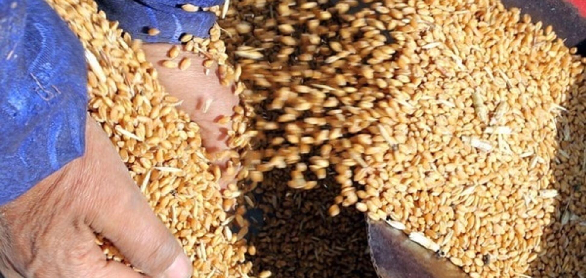 'Ось такий Техас': на Кіровоградщині рейдери зі зброєю крадуть зерно