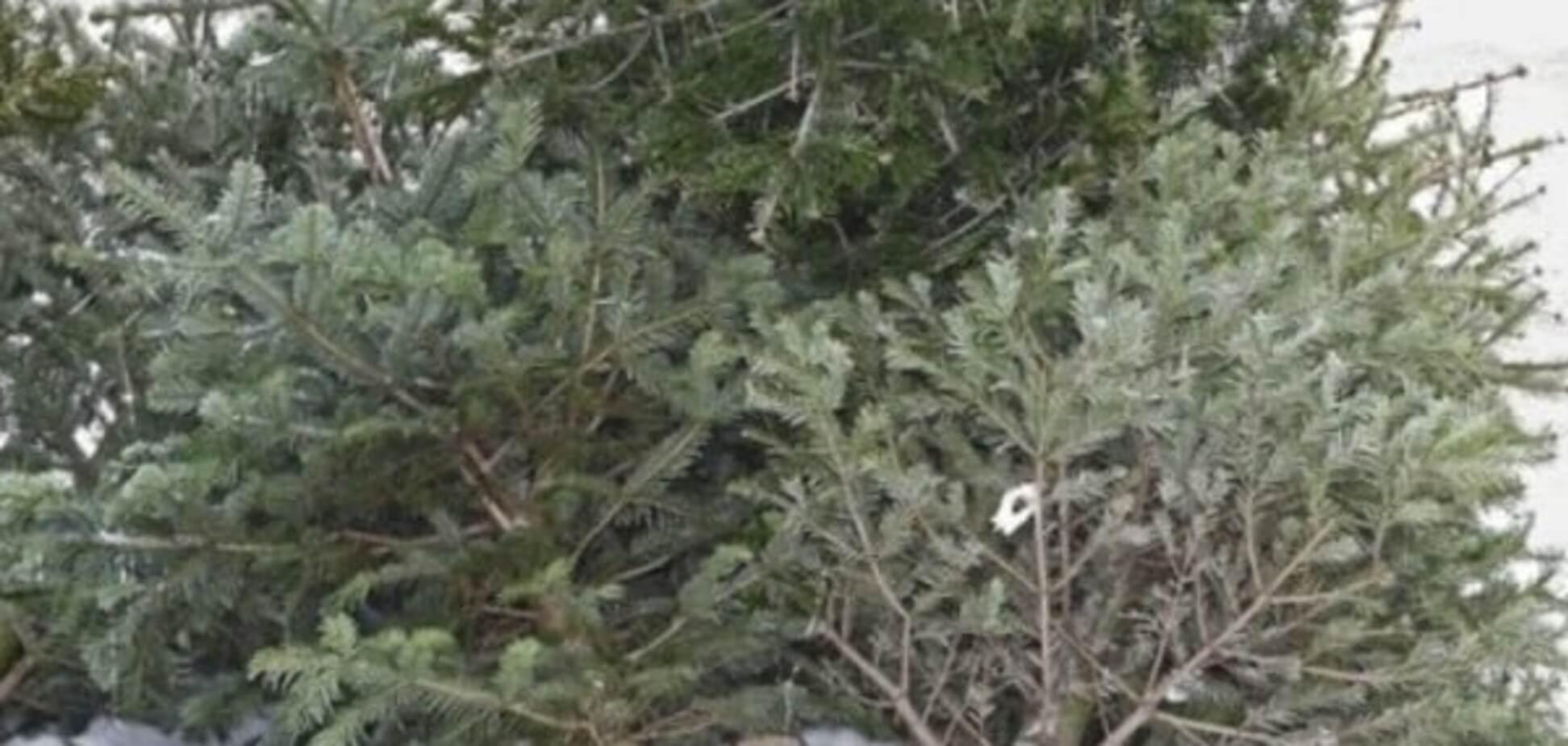 Как животным: на Донбассе призывают 'скармливать' елки террористам
