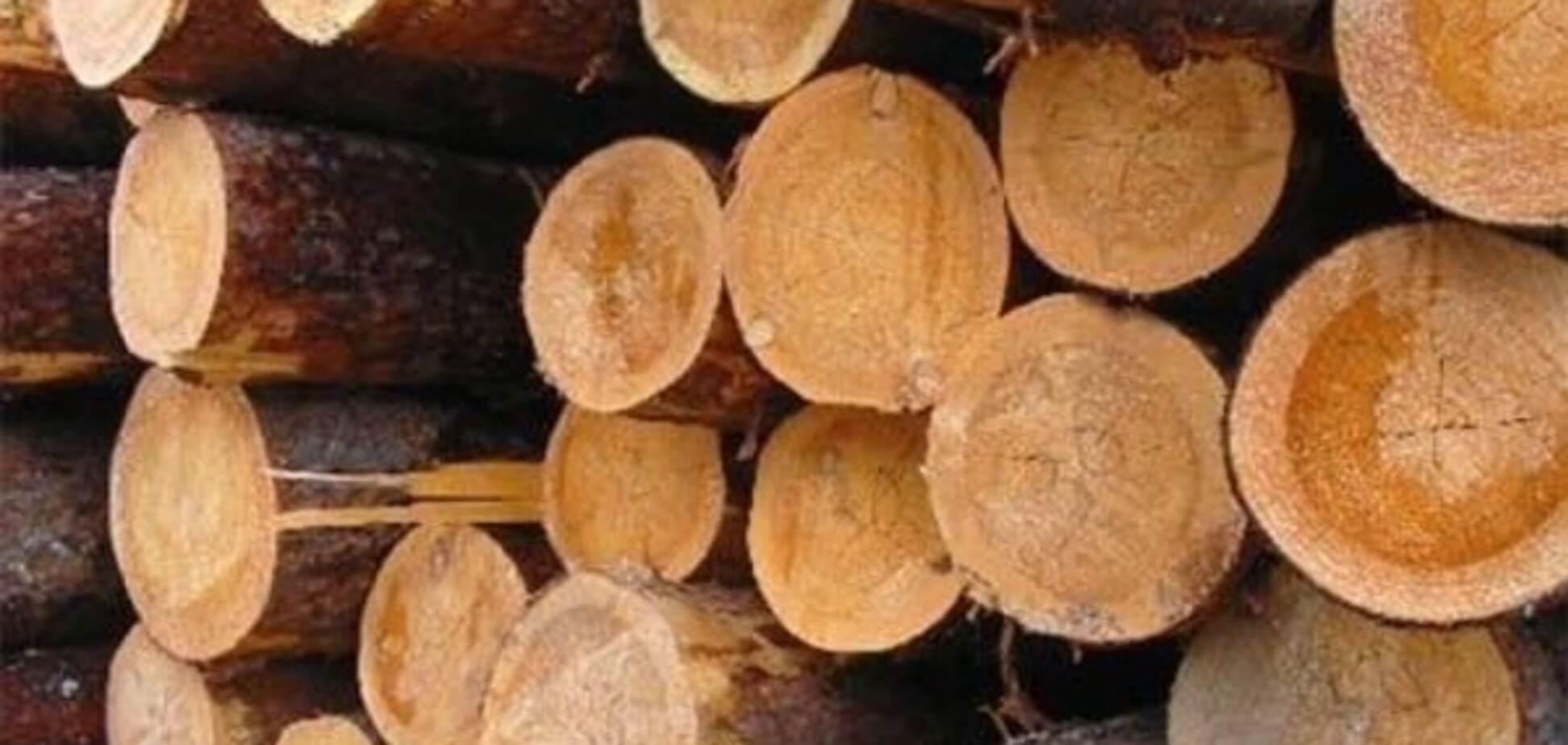 Мораторій на експорт лісу