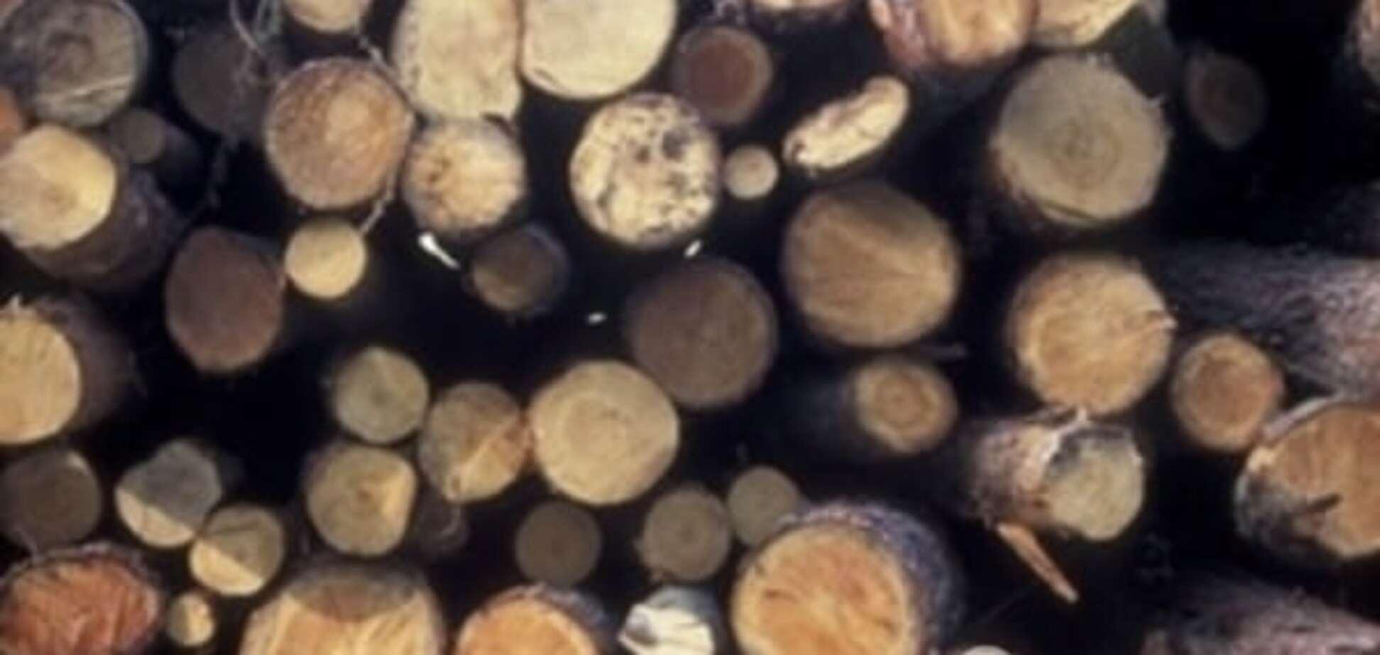 Вырубка лесов в Украине