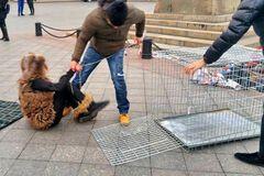 Акция 'Антимех: в Одессе девушку посадили в клетку